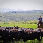 C Lazy U Ranch照片