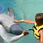 Rubbing the dolphin's belly