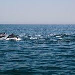 Photo of Sidab Sea Tours