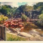 Temaiken Biopark Foto