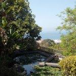 Foto de Jardín Acuático