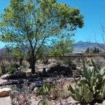 Photo of Chiricahua Desert Museum