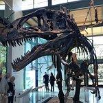 T-rex head on
