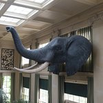 The music room where George Eastman had his breakfast, elephant head from one of his trips to Af