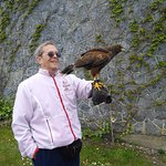 Falconry in walled garden