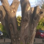 Carved tree in garden 2