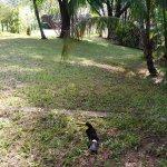 Comfort Inn Palenque, Chiapas Foto