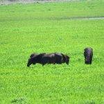 Paynes Prairie Preserve State Park Foto