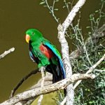 Beautiful colourful bird aviary