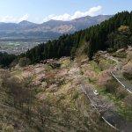 Takamoritoge no Senbonsakura
