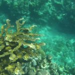 Best snorkeling experience of your life