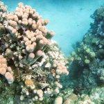 More beauty underwater