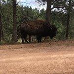 Photo de Custer State Park
