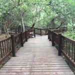 Puentes entre distintas áreas del lodge