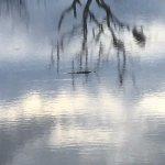 Cocodrilo en una de las lagunas