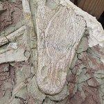 Fossilized Ancient Crocodile