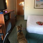 Foto de Best Western Plus Wilmington/Wrightsville Beach