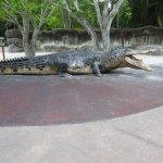 The big croc