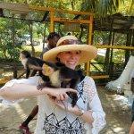 Monkeys after the ziplines
