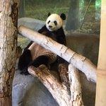 love the pandas