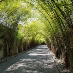Bamboo Entry