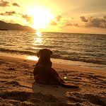 Sunset by the beach. Caught this dog enjoying the sunset and sat behind him to enjoy the view to