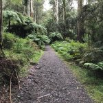 A short 1.3km walk from road to falls is an easy walk for all ages. The walking track is rated a