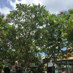 Photo de Andaman Cannacia Resort