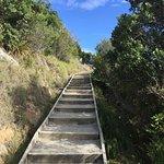 Photo of Mount Maunganui Summit Track