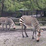 Photo of Warsaw Municipal Zoological Garden