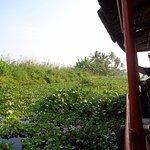 The backwater jungle