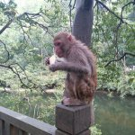 Cheeky monkey at Guiyang Park - be careful they are hungry!