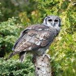 Bird of prey show