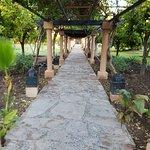 Photo de Hotel Riu Tikida Garden