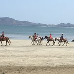 """""""Trail rides"""" available along the beach."""