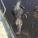 Photo de Everglades River of Grass Adventures -Tours