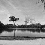 Photo de Parc d'Ibirapuera