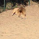Foto de La Palmyre Zoo