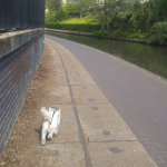 Walking along the canal with the pooch