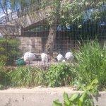 London zoo!