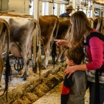 Visiting the dairy barn.