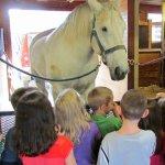 Jim, a Percheron draft horse looks forward to your visit!