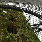 Cloud Forest Greenhouse