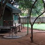 Photo of Crocodile Bridge Rest Camp