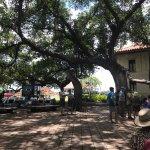 Photo de Banyan Tree Park