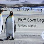 Bluff Cove Brochure