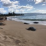 Photo of Turtle Bay Beach