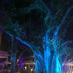 Lit Banyan tree at night