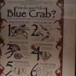 How do you pick a blue crab? Useful info.