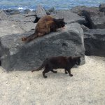 Cats on the beach!